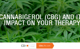 Cannabigerol (CBG) and Its Impact on Your Therapy