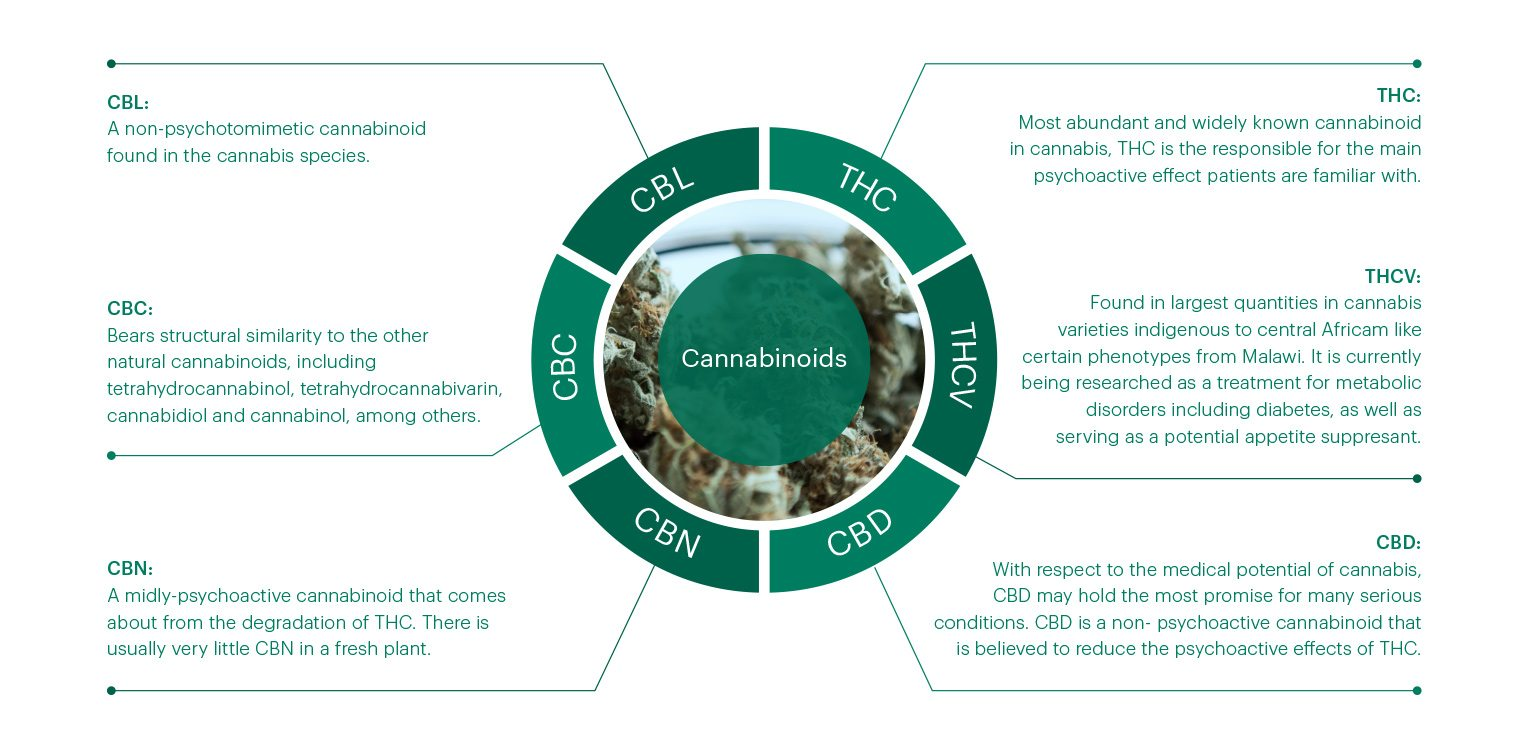 an overview of the use of marijuana and the chemical thc This cancer information summary provides an overview of the use of cannabis and  inhaled marijuana and oral thc  the use of cannabis and cannabinoids in the.